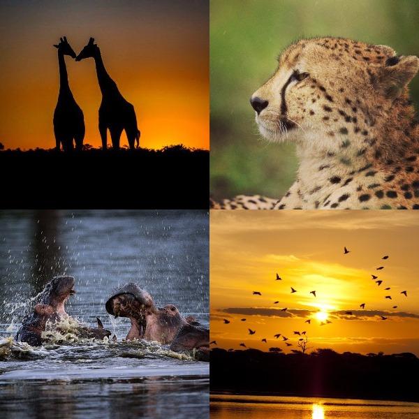 Kruger park cc