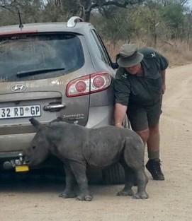 baby rhino 3