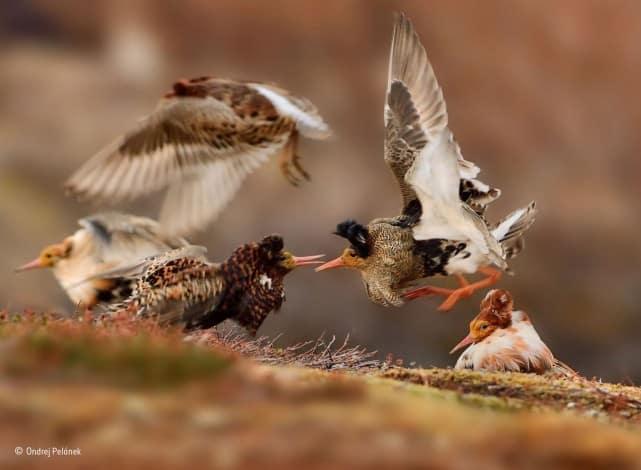 Ondrej-Pelánek- Young Wildlife Photographer of the Year