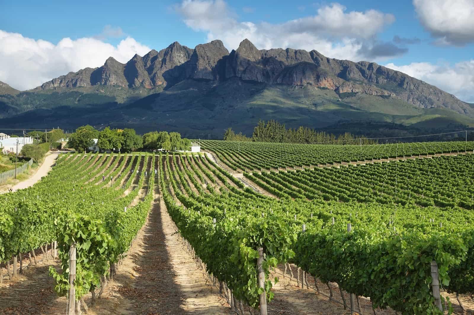 Vineyards landscape near Wellington